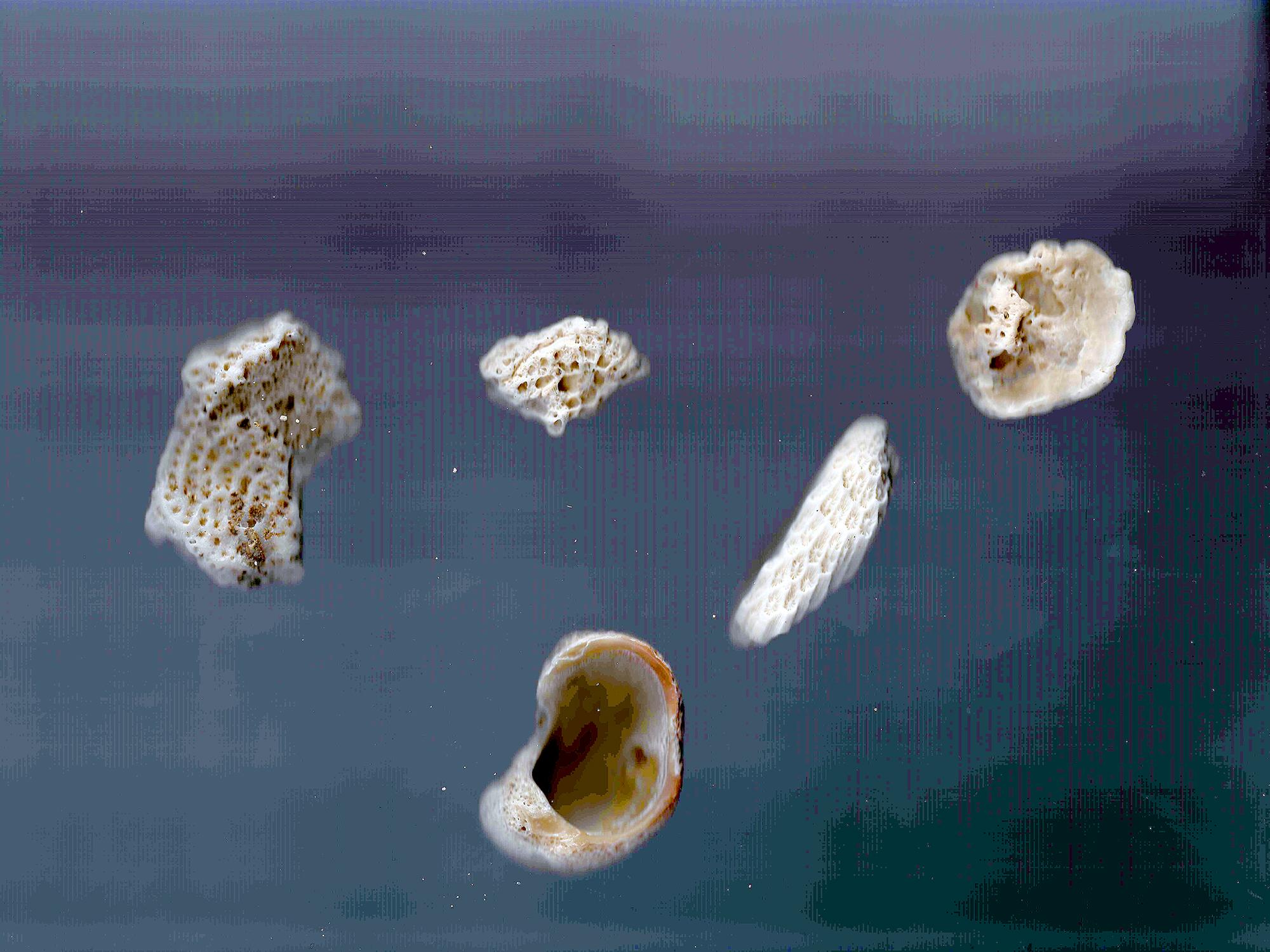 coral, athropocene, death, earth, dystopia, ocean